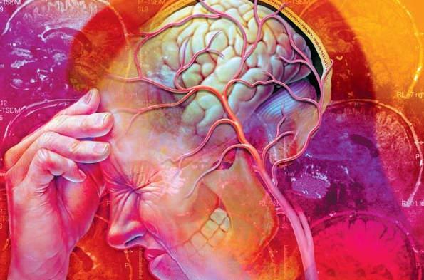 красивый мозг