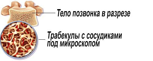 Трабекулы